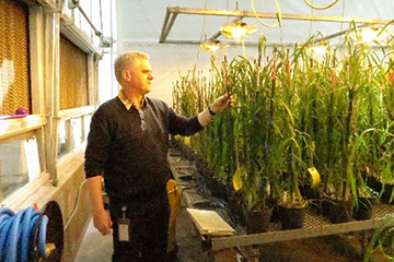 Dr. Axel Diederichsen in one of PGRC's greenhouses.