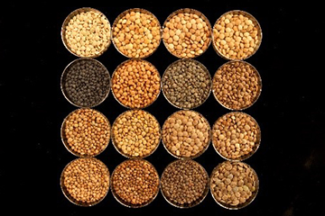 An image of diverse lentil seeds (Lens culinaris).