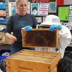 Dressed in a beekeeper suit, a student pulls dividers from a bee hive.