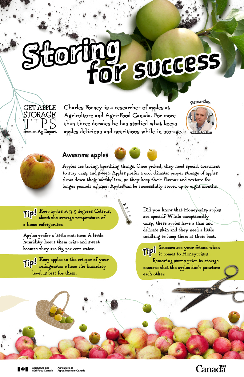 Storing for success - apples - infographic