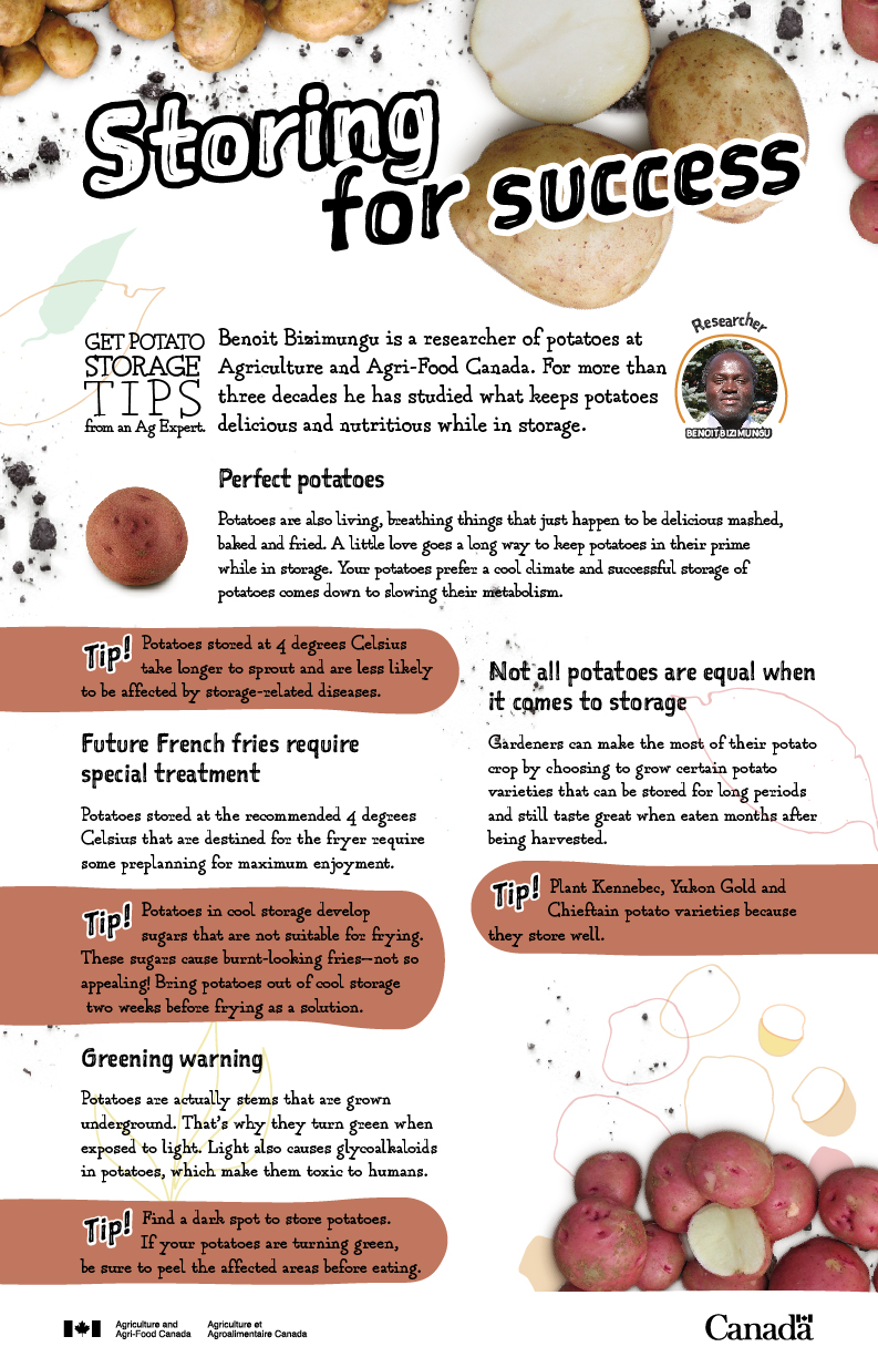 Storing for success - potatoes - infographic