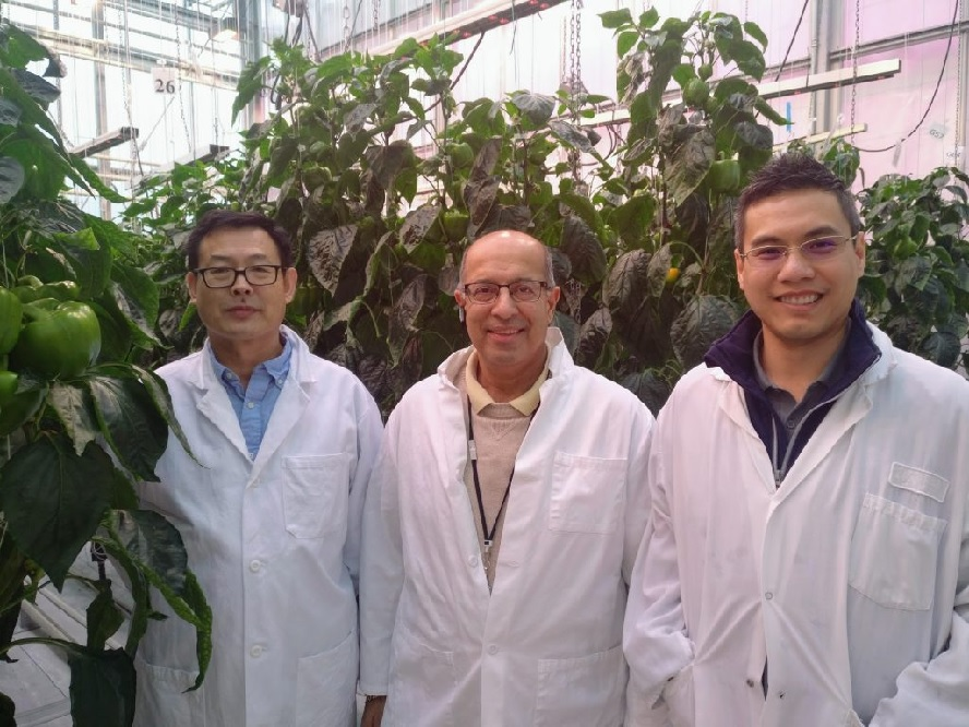 Dr. Xiuming Hao, Shalin Khosla, and Dr. Kenneth Tran in a greenhouse