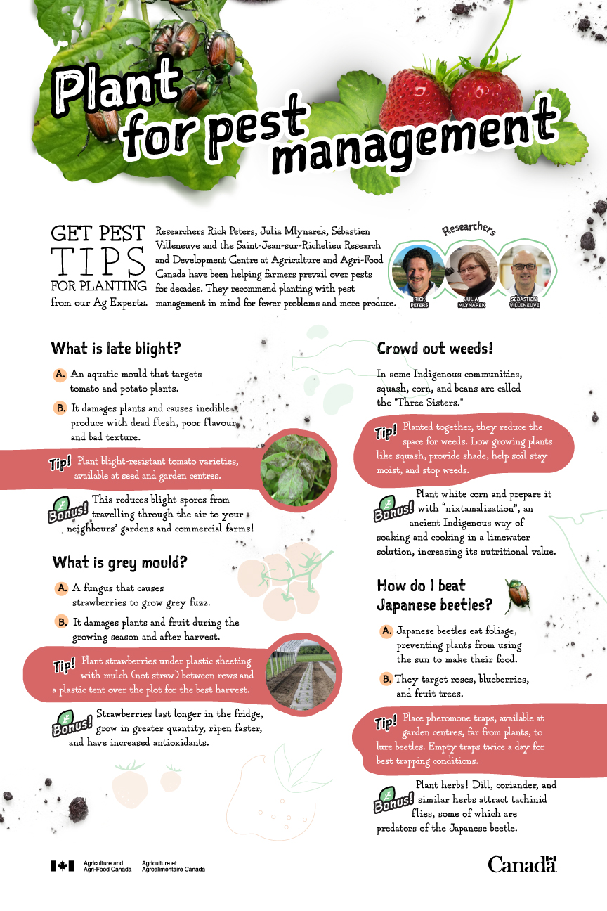 Plant for pest management- infographic